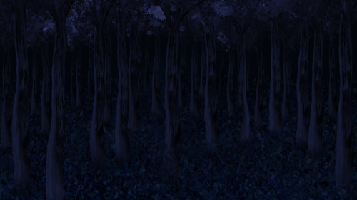 Forest Trees Night